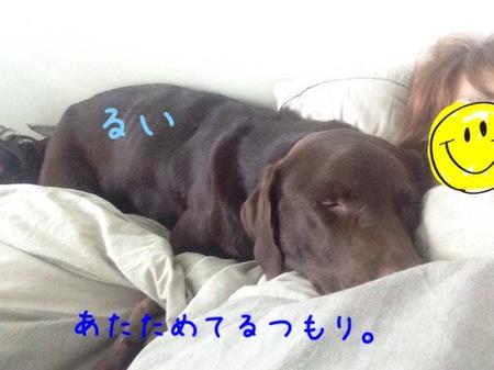 2014-01-17 19.23.09.jpg