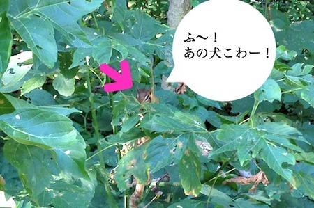 IMG_3906.jpg