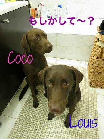 bath-time-lab01.jpg