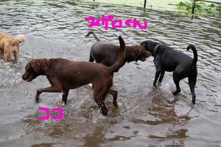 bkln-dogbeach01.JPG