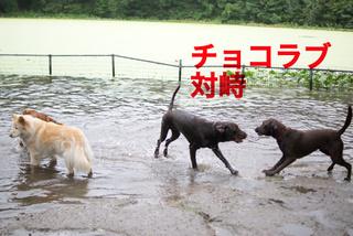 bkln-dogbeach03.JPG