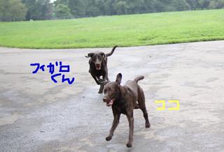 bkln-dogbeach05.JPG