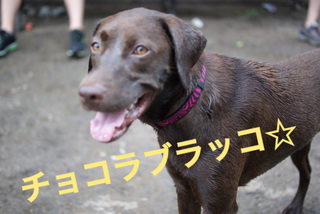 bkln-dogbeach07.JPG