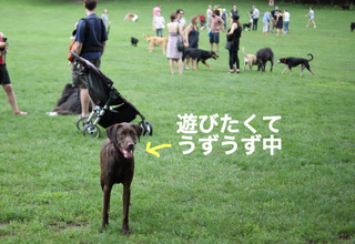bkln-dogbeach09.JPG