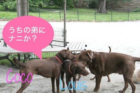 choco-ojisan05.jpg