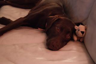 couch-dog.JPG