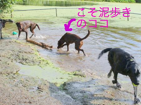 dog-beach01.JPG
