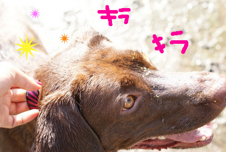 dog-beach03.JPG