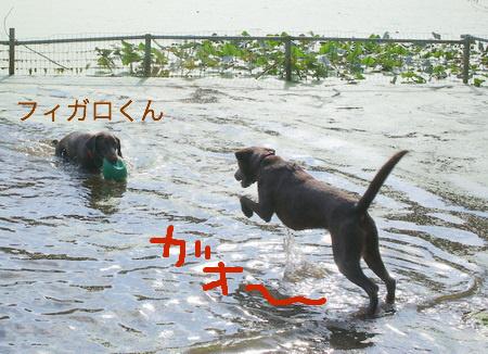 dog-beach05.JPG