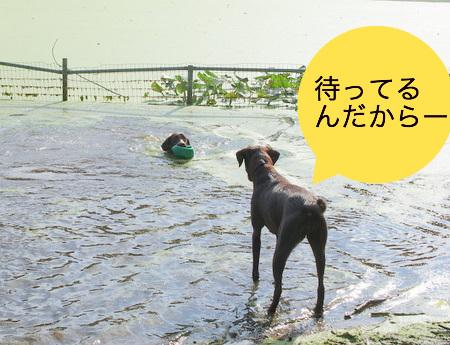 dog-beach06.JPG