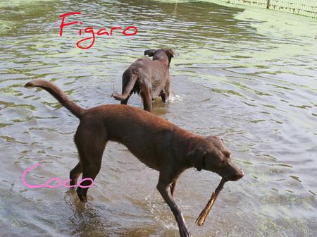 dog-beach08.JPG