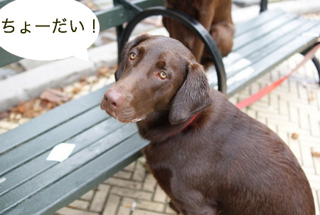 dog-beach15.JPG