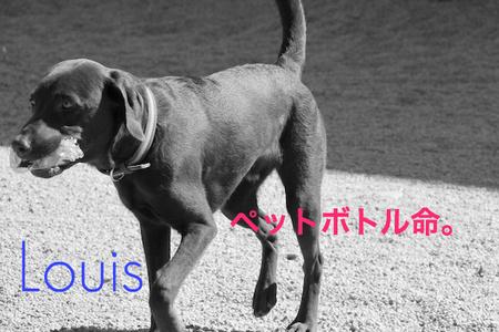 dog-run04.jpg