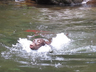 dogs-in-the-river6.JPG