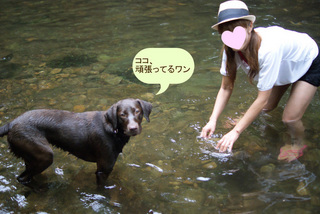 dogs-in-the-river7.JPG