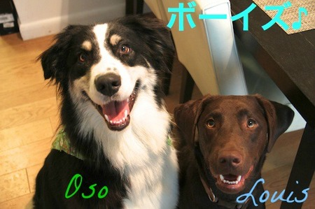 happy-dogs02.jpg