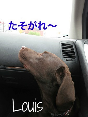 lab-drive03.jpg