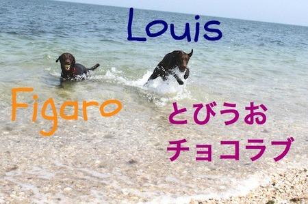 li-beach-lab02.jpg