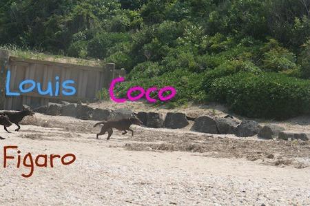 li-beach-lab10.jpg