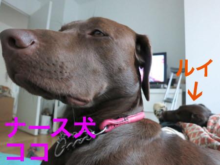 nurse-dogs.JPG