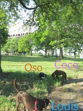 qb-park-morning-01.jpg