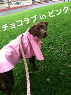 rainy-dog01.JPG