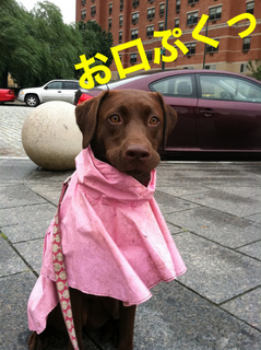 rainy-dog02.JPG