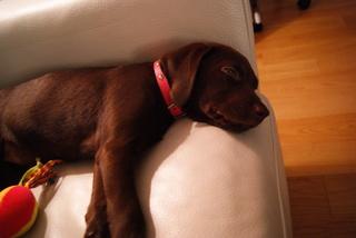 sleeping-before.JPG
