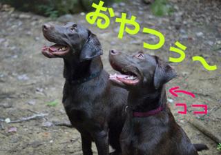 yama-dog13.JPG