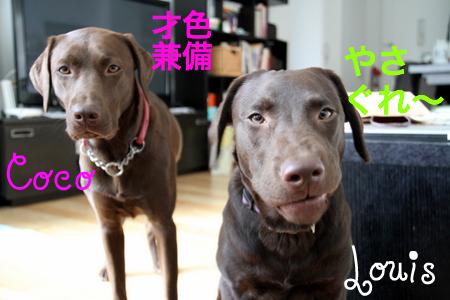 yasagure-pup03.JPG
