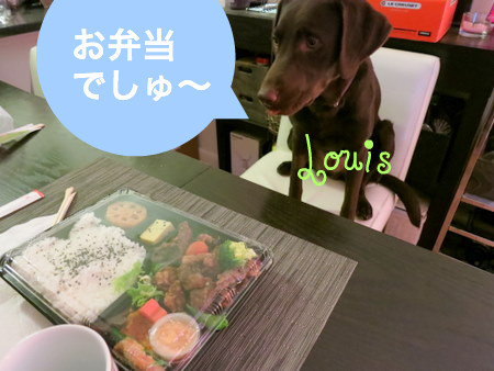 yasagure-pup06.JPG